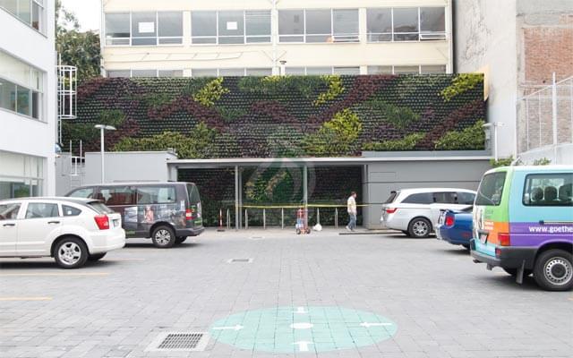 2º Muro Verde con vegetación en crecimiento