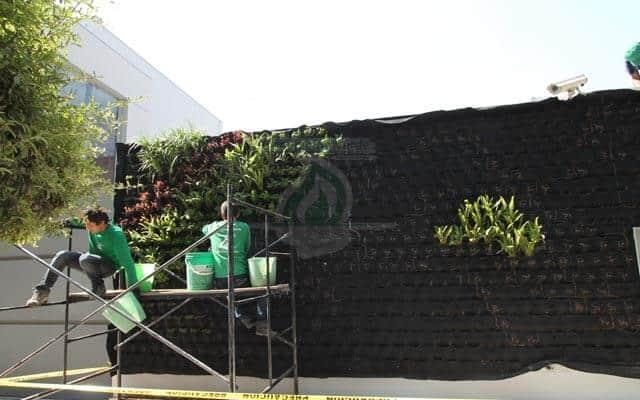 Plantación de vegetación