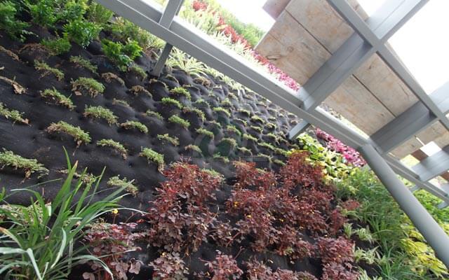 Vegetación natural en crecimiento