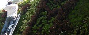 Mantenimiento a Jardines Verticales y Muros Verdes