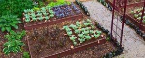 ¿Qué es un Cultivo Orgánico?