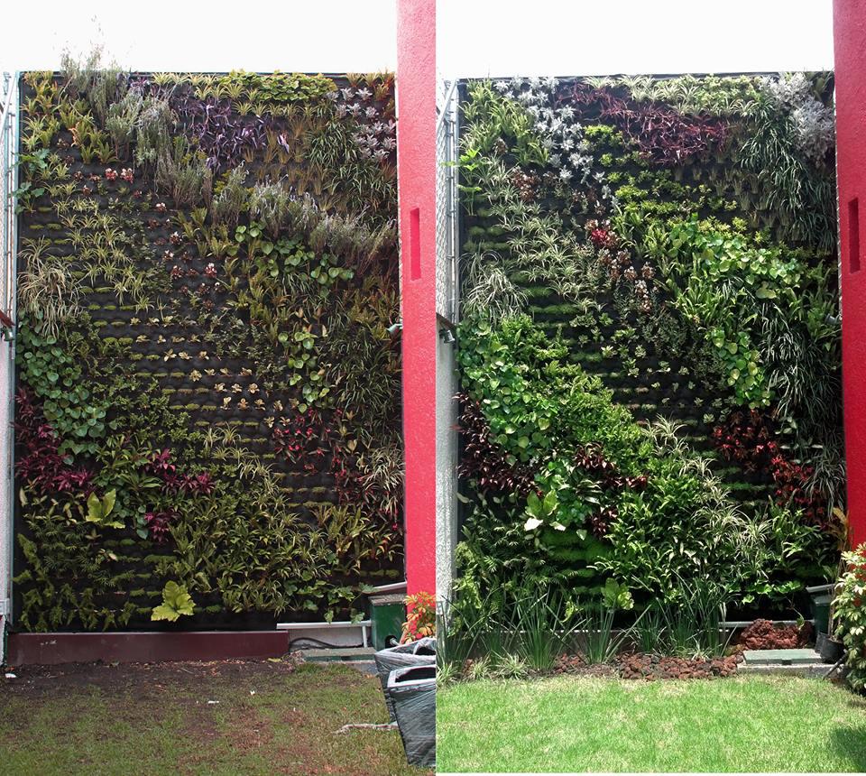 Patios y terrazas con jardines verticales for Jardines verticales historia