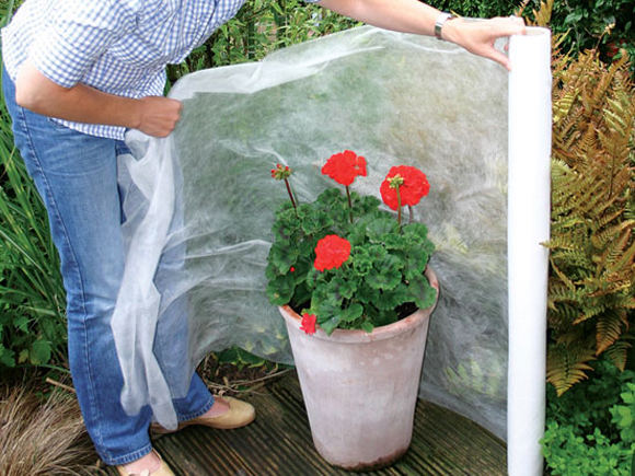 cuidados de las plantas en invierno