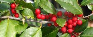 Plantas venenosas que podrían estar en tu jardín