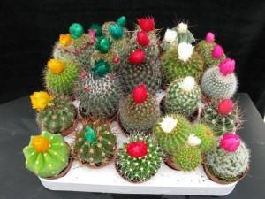 1296745953_129819052_1-venta-de-cactus-orquideas