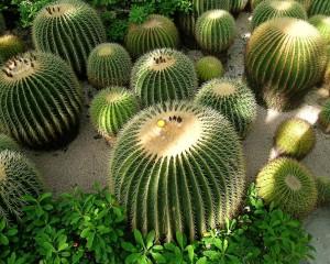 cactus-199085