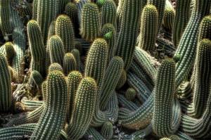 cactus-5f4db8c2-07a9-4eb9-92c0-306dff2a3e0f