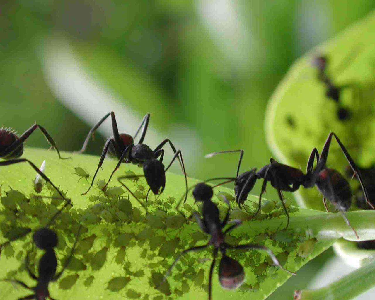 C mo eliminar las plagas de forma ecol gica for Como eliminar plaga de hormigas