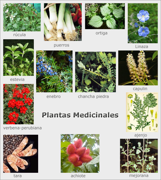 Plantas medicinales hierbas medicinales for Tipos de hierbas medicinales