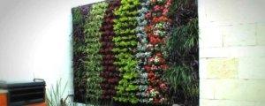 Plantas de interior y exterior para los muros y azoteas verdes.
