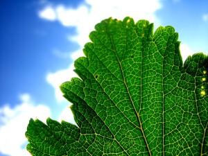 naturaleza-fotos-de-plantas-verdes-----www.bancodeimagenesgratuitas.com-----04