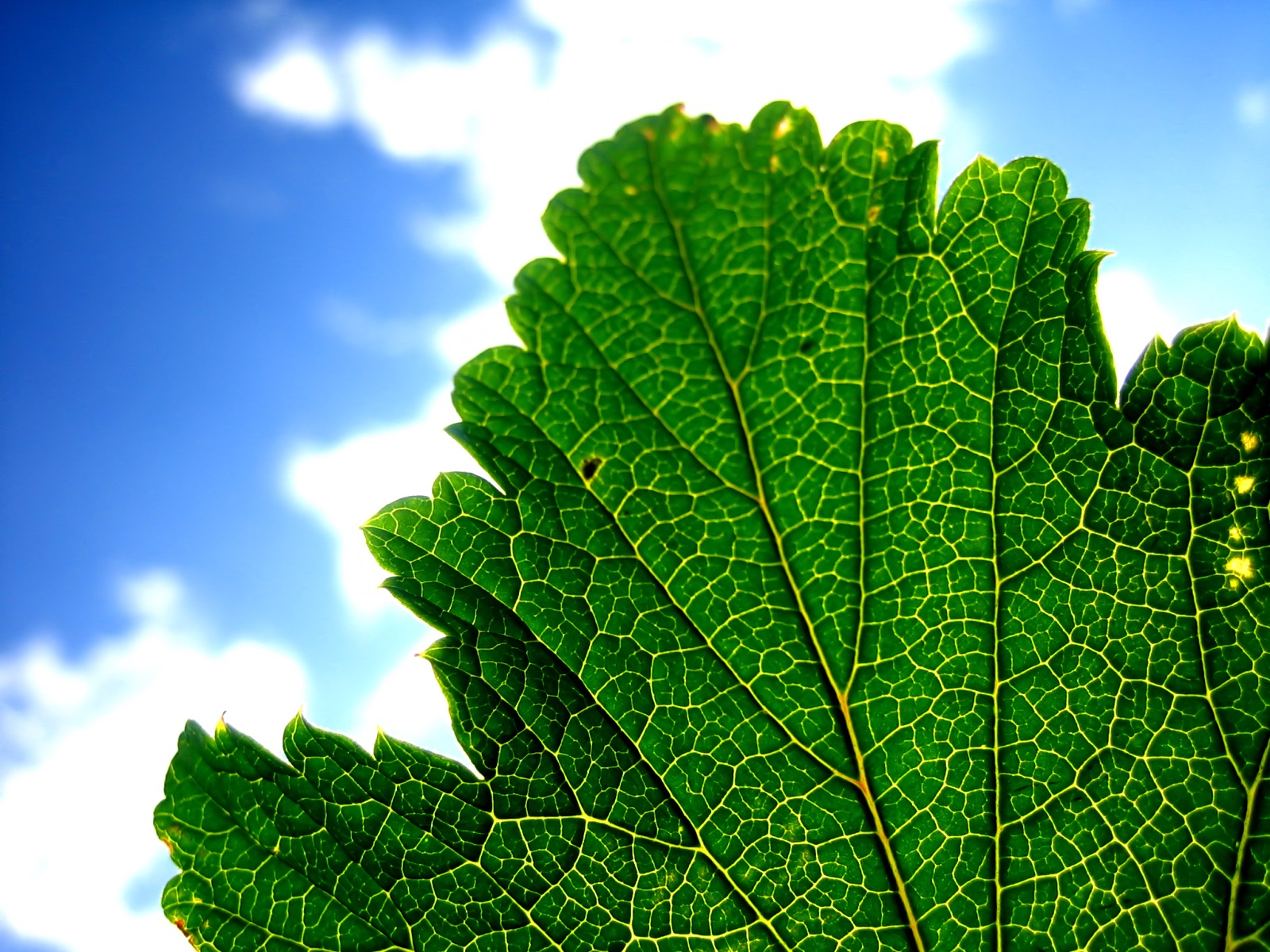 qu son las plantas generaci n verde