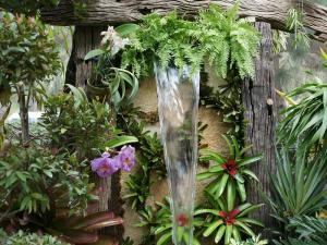 Helechos como plantas ornamentales.
