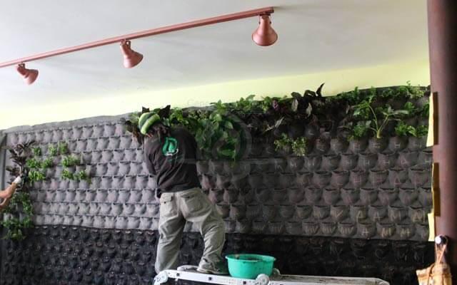 Colocación de vegetación natural