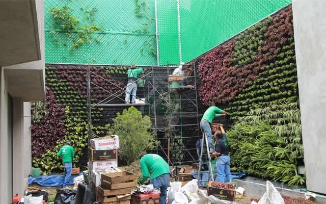 Plantación de Vegetación Natural