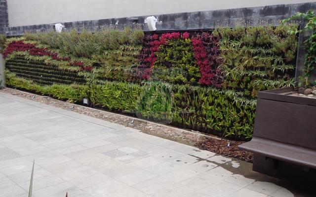 Vegetación Viva