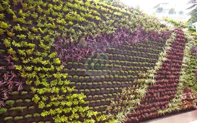Muro Verde con vegetación recién plantada
