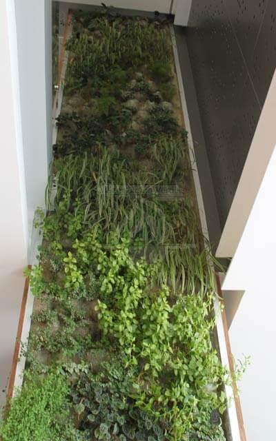 Vegetación después de un tiempo