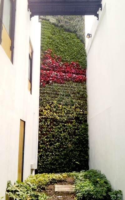 Jardín Vertical Roma Norte, Cuauhtémoc