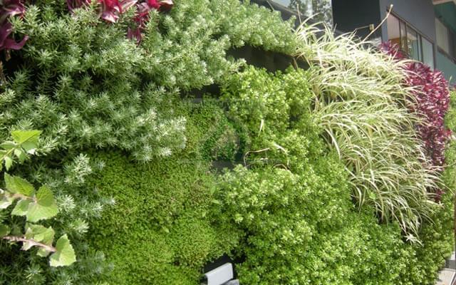 Muro Verde con Vegetación Natural