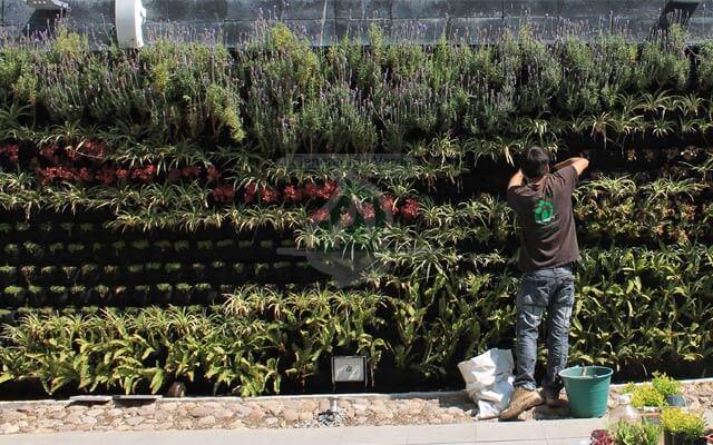 Jardín Vertical en plantación