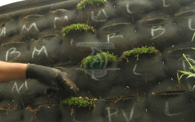 Muero Verde Exterior Nonoalco, Cuauhtémoc