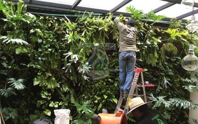 Mantenimiento del Muro Verde