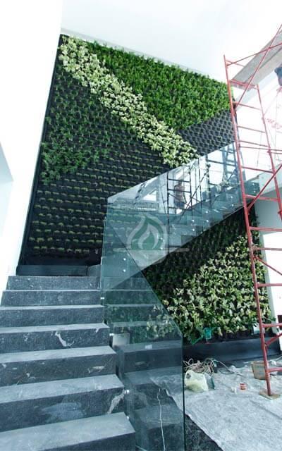 Muro Verde recién plantado