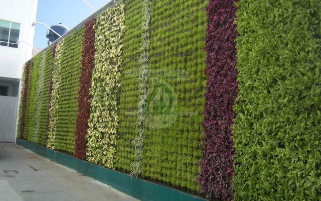 Muro Verde Natural en exterior del trabajo