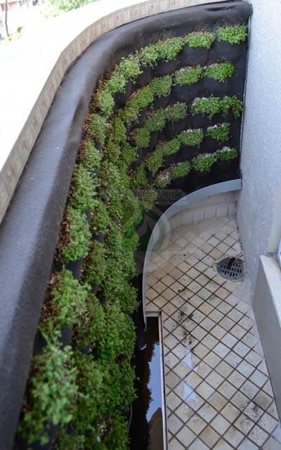 Muro Verde con vegetación de una sola especie (Lágrima)