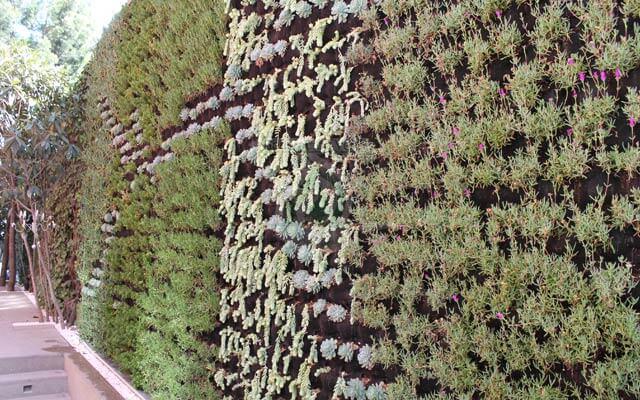 Vegetación de suculentas