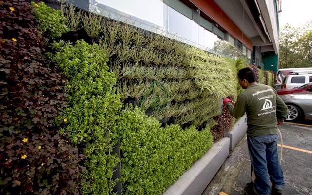 Muro Verde con planta adecuada a la zona