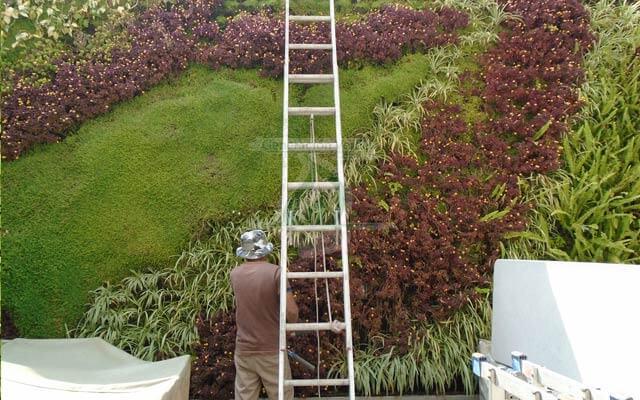 Mantenimiento del Jardín Vertical