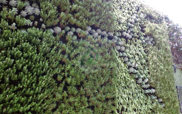 Vegetación natural del muro verde