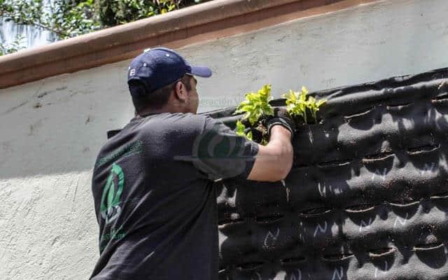 Plantación de Muro Verde