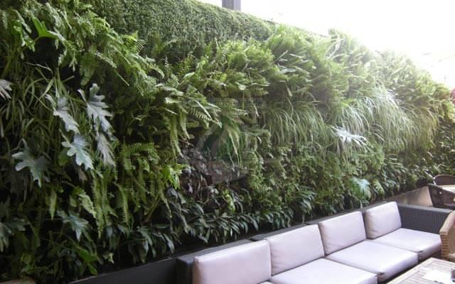 Muro Verde Exterior