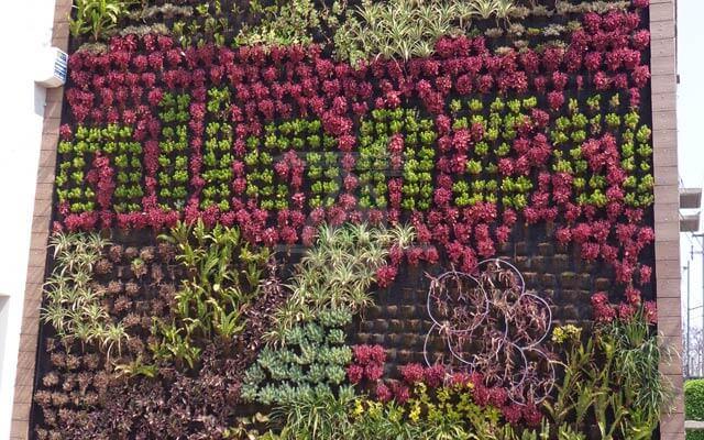 Muro verde en crecimiento