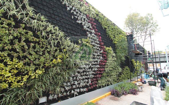 Plantación de la Vegetación