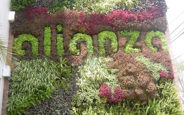 Muro Verde con vegetación crecida