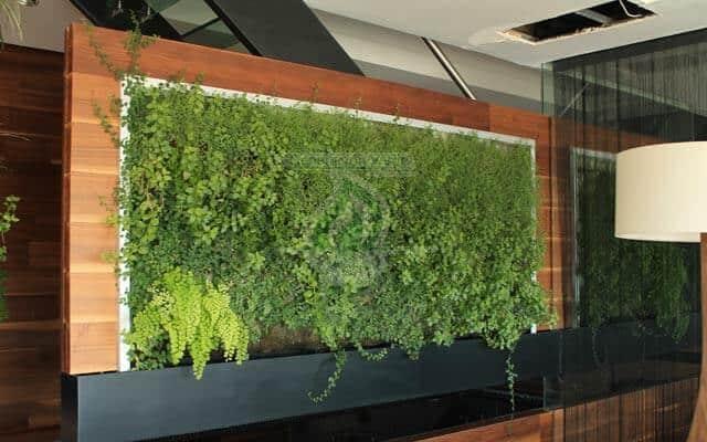 Vegetación para interior