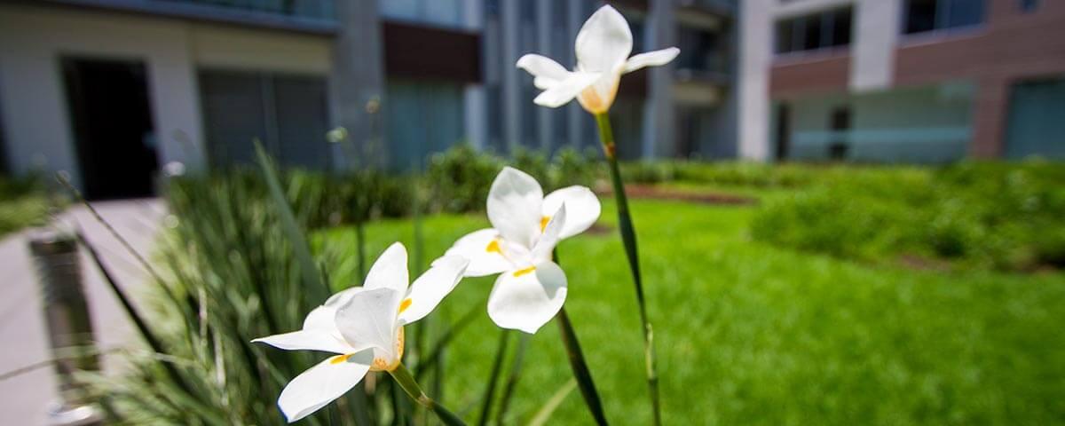 Cotizar azoteas y jardines