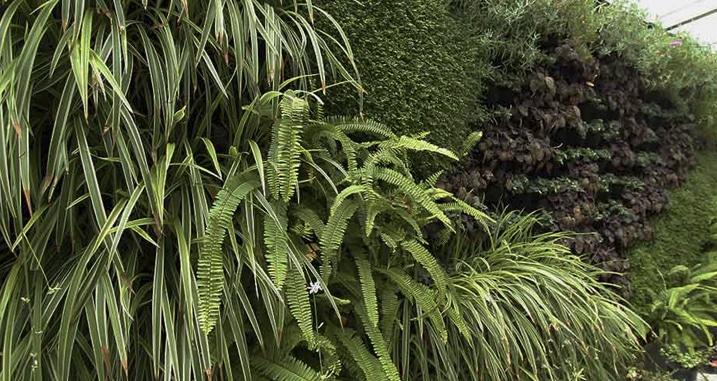 Jardines verticales m xico bondades y beneficios for Beneficios de los jardines verticales
