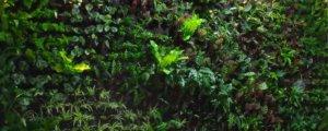 Jardines Verticales en Espacios Reducidos