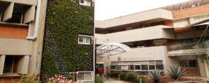 Jardines Verticales mejoran el ambiente