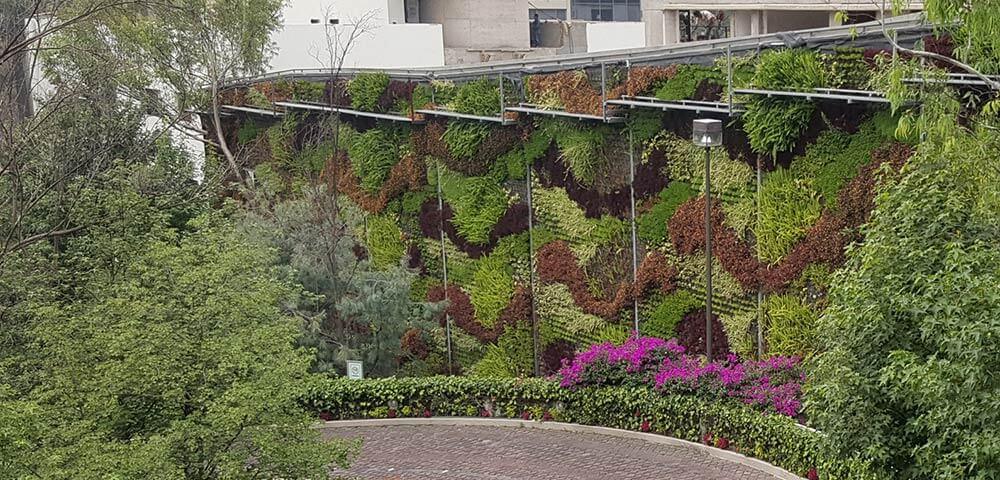 Muro Verde en colindancia