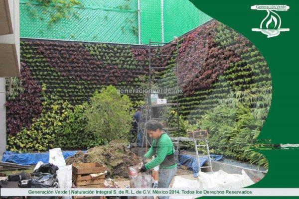 Mantenimiento Muro Verde