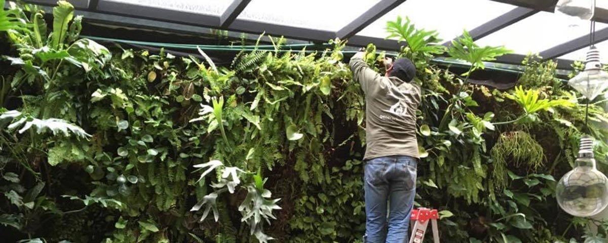 Mantenimiento jard n vertical y muro verde generaci n verde for Riego jardin vertical