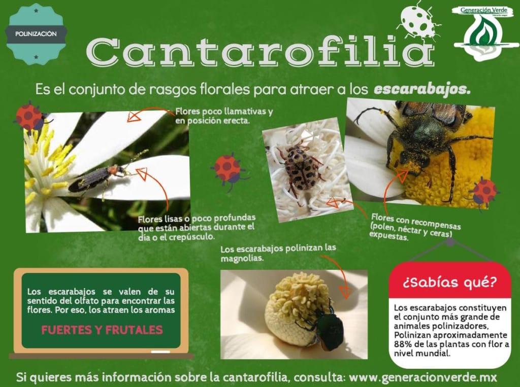 Cantarofilia