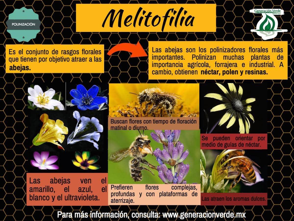 Melitofilia