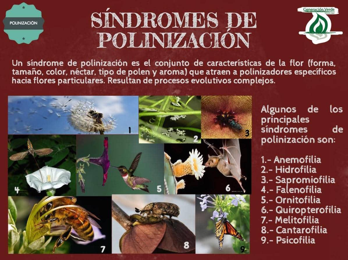 Síndromes de polinización